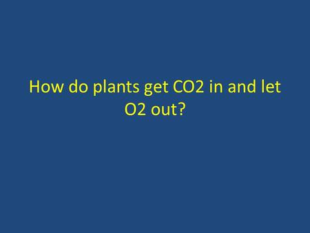 How do plants get CO2 in and let O2 out? Stomata & Guard Cells Function of stomata – CO 2 in – O 2 out – H 2 O out gets to leaves for photosynthesis.