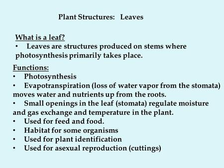 Plant Structures: Leaves What is a leaf? Leaves are structures produced on stems where photosynthesis primarily takes place. Functions: Photosynthesis.