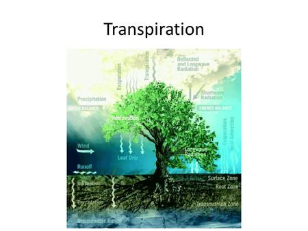 "Transpiration. the release of water vapor by plants to the atmosphere ""is not an essential or an active physiological function of plants"" a largely passive."