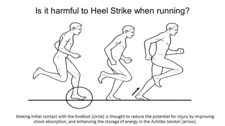 Is it harmful to Heel Strike when running? Making initial contact with the forefoot [circle] is thought to reduce the potential for injury by improving.