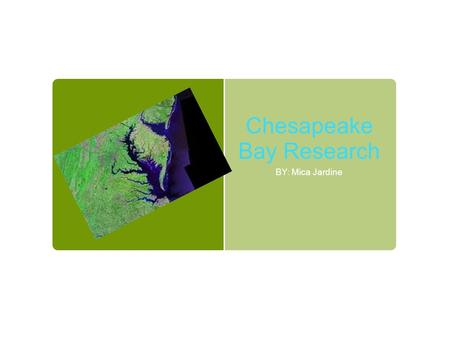 Chesapeake Bay Research BY: Mica Jardine. It Is Important To Have A Variety of living Things In The Bay The Soft Shell Clams help to keep the bay clean.