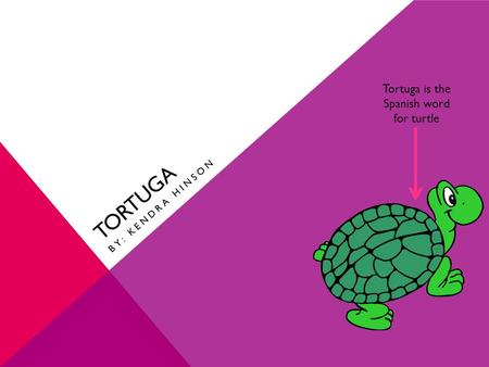 TORTUGA BY: KENDRA HINSON Tortuga is the Spanish word for turtle.