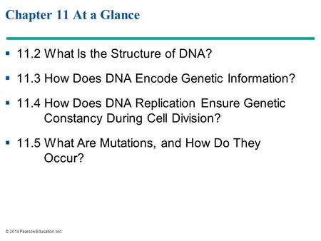 © 2014 Pearson Education, Inc. Chapter 11 At a Glance  11.2 What Is the Structure of DNA?  11.3 How Does DNA Encode Genetic Information?  11.4 How Does.