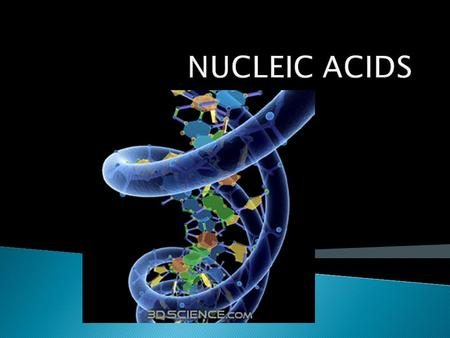 B4 - analyse the structure and function of nucleic acids  Recognize structural diagrams of: DNA, RNA, ATP  List the functions of DNA and RNA  Describe.