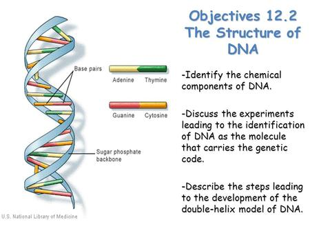 Objectives 12.2 The Structure of DNA -Identify the chemical components of DNA. -Discuss the experiments leading to the identification of DNA as the molecule.