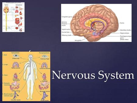 { Nervous System.  Sensory input  Sensory receptors  Collect info  Integration  Interpretation of stimuli  Occurs in CNS (brain & spinal cord) Nervous.