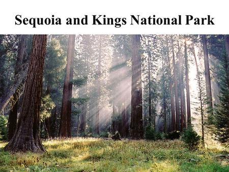 Sequoia and Kings National Park. Where is it? It is located in California.