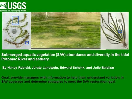 Submerged aquatic vegetation (SAV) abundance and diversity in the tidal Potomac River and estuary By Nancy Rybicki, Jurate Landwehr, Edward Schenk, and.