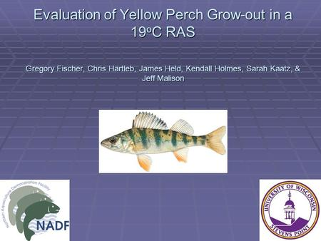 Evaluation of Yellow Perch Grow-out in a 19 o C RAS Gregory Fischer, Chris Hartleb, James Held, Kendall Holmes, Sarah Kaatz, & Jeff Malison.