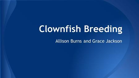 Clownfish Breeding Allison Burns and Grace Jackson.
