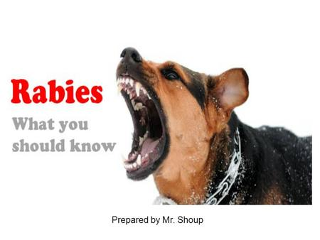 Prepared by Mr. Shoup. Rabies Rabies is a preventable viral disease of mammals most often transmitted through the bite of a rabid animal. The vast majority.