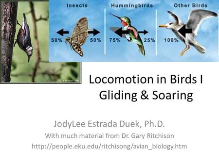 Locomotion in Birds I Gliding & Soaring JodyLee Estrada Duek, Ph.D. With much material from Dr. Gary Ritchison