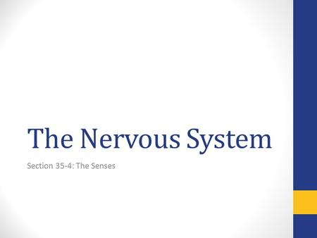 The Nervous System Section 35-4: The Senses. The Senses Sensory Receptors: neurons that react to specific stimuli such as light or sound by sending impulses.