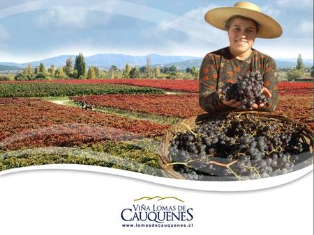 History Cooperativa Agrícola Vitivinícola de Cauquenes Ltda., better known as Viña Lomas de Cauquenes, was started by a group of people on December 23th,