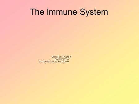 The Immune System. I. Source of Infection Pathogen - microorganism that causes disease Ex: bacteria, virus, yeast, fungus, protists, parasitic worms,