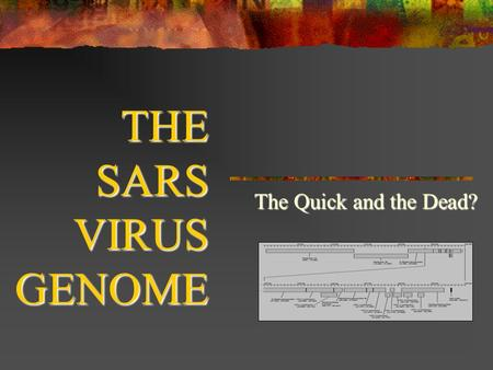 THE SARS VIRUS GENOME The Quick and the Dead?. SARS Severe Acute Respiratory Syndrome First identified in Guangdong Province, China Mortality 3-6% (45-63%