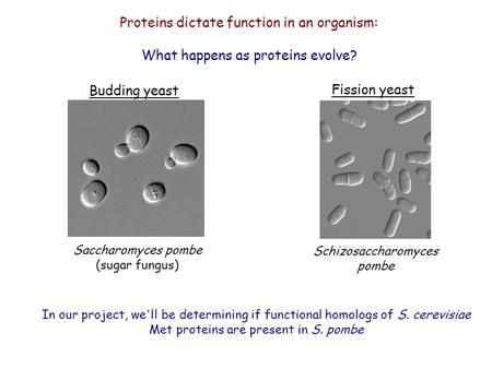 Proteins dictate function in an organism: