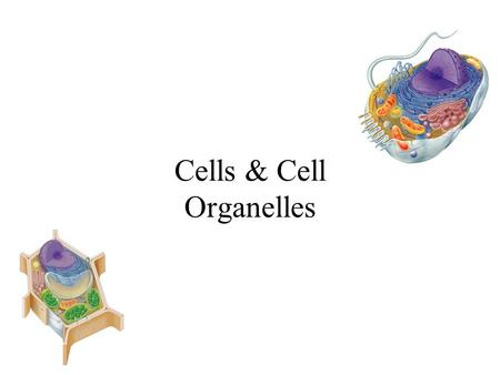 Cells & Cell Organelles Cell Theory The cell theory is the unifying theme in biology because it emphasizes the similarity of all living things. –All.