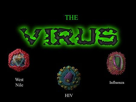 HIV Influenza West Nile THE. What is a Virus? Virus ~ Infectious agent made up of a core of nucleic acid and a protein coat. Virus = Poison Not a living.