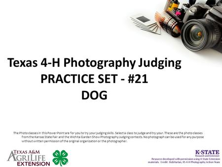 Texas 4-H Photography Judging PRACTICE SET - #21 DOG The Photo classes in this Power Point are for you to try your judging skills. Select a class to judge.