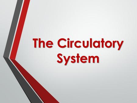 The Circulatory System. 3 Main Functions 1. Transport Oxygen from lungs 2. Transport Carbon Dioxide to lungs 3. Carry nutrients to body.
