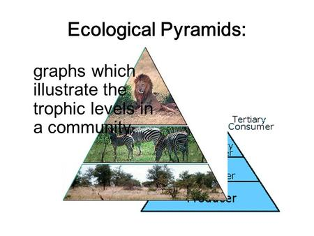Ecological Pyramids: graphs which illustrate the trophic levels in a community.