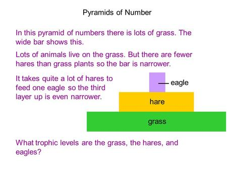 8D Pyramids of numbers In this pyramid of numbers there is lots of grass. The wide bar shows this. Lots of animals live on the grass. But there are fewer.