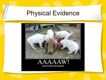 Physical Evidence. Class characteristics: Evidence can only be associated with a group and not a unique source Individual characteristics: Evidence can.