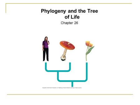 Phylogeny and the Tree of Life Chapter 26. Systematics: Discipline focused on classification of organisms.