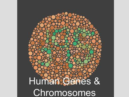 Human Genes & Chromosomes. Human Genetic Disorders Nondisjunction is a cause of some human genetic disorders –In nondisjunction, the members of a chromosome.