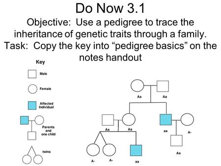 "Do Now 3.1 Objective: Use a pedigree to trace the inheritance of genetic traits through a family. Task: Copy the key into ""pedigree basics"" on the notes."