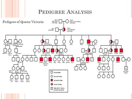 P EDIGREE A NALYSIS Have you ever seen a family tree… do you have one?? Graphic representation of family inheritance. Pedigree of Queen Victoria.