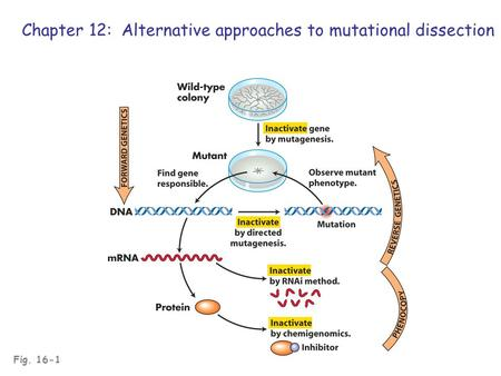 Fig. 16-1 Chapter 12: Alternative approaches to mutational dissection.