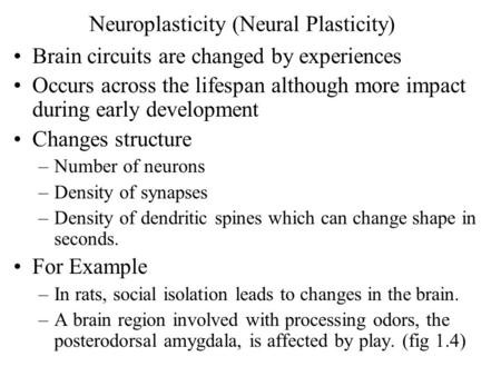 Neuroplasticity (Neural Plasticity) Brain circuits are changed by experiences Occurs across the lifespan although more impact during early development.