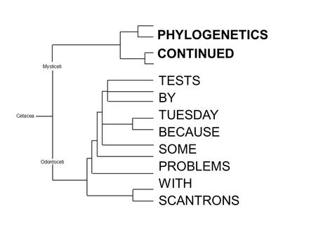 PHYLOGENETICS CONTINUED TESTS BY TUESDAY BECAUSE SOME PROBLEMS WITH SCANTRONS.