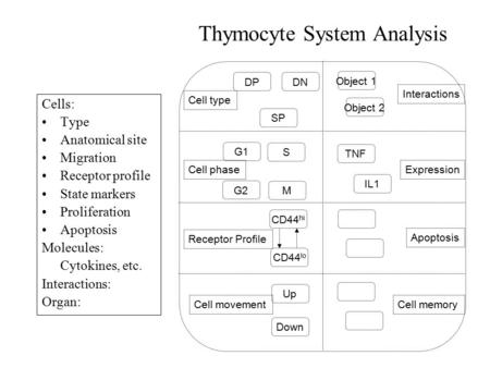 Thymocyte System Analysis Cells: Type Anatomical site Migration Receptor profile State markers Proliferation Apoptosis Molecules: Cytokines, etc. Interactions: