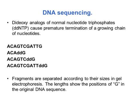 DNA sequencing. Dideoxy analogs of normal nucleotide triphosphates (ddNTP) cause premature termination of a growing chain of nucleotides. ACAGTCGATTG ACAddG.