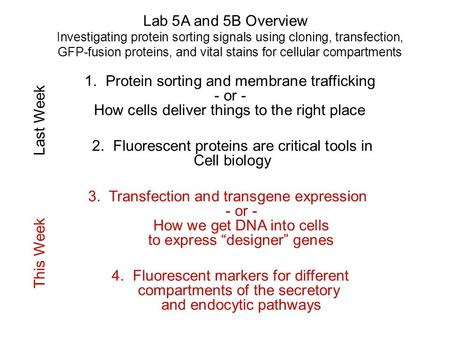 Lab 5A and 5B Overview Investigating protein sorting signals using cloning, transfection, GFP-fusion proteins, and vital stains for cellular compartments.
