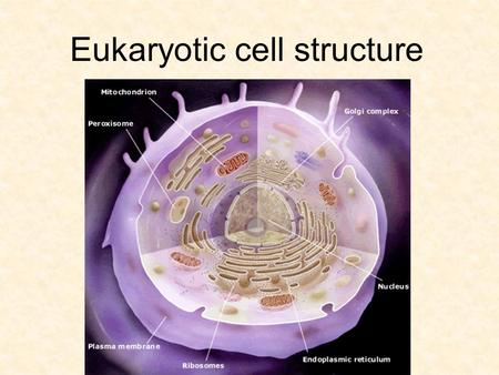 Eukaryotic cell structure. Plasma membrane boundary between cell and external environment.