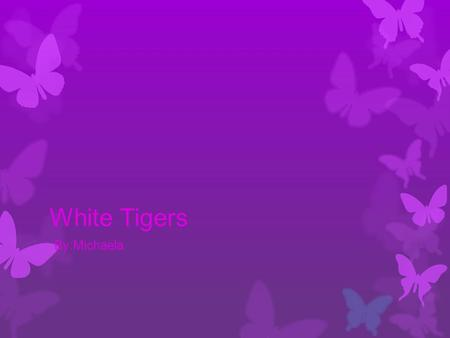 White Tigers By:Michaela. Pictures Size & Weight SSize 2.4m-3.3m (6.8ft-11ft) WWeight 140kg-300kg ( 309lbs-660lbs)