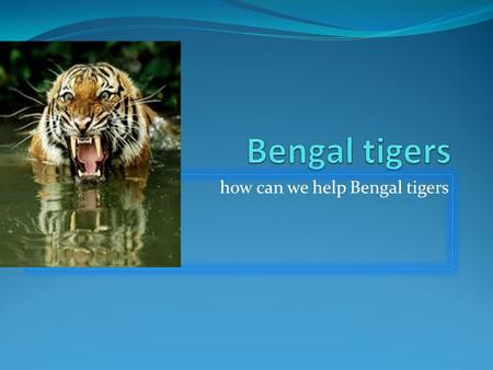 How can we help Bengal tigers. Fun facts Bengal tigers are really smart and really colorful. Tigers are the largest members of the cats family and are.