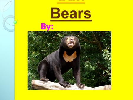 Sun Bears By: Kallie Why I chose this I chose Sun bears because I think that they look different from any other bear.