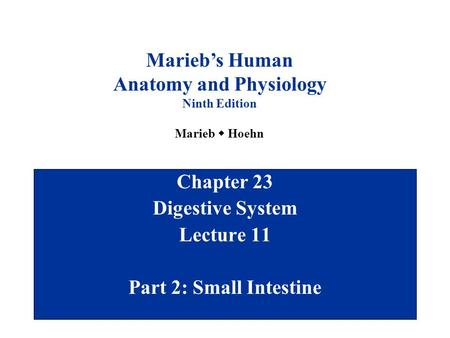 Chapter 23 Digestive System Lecture 11 Part 2: Small Intestine