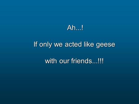 Ah...! Ah...! If only we acted like geese with our friends...!!!