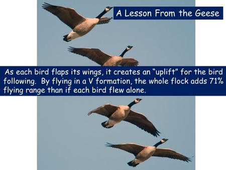 "As each bird flaps its wings, it creates an ""uplift"" for the bird following. By flying in a V formation, the whole flock adds 71% flying range than if."