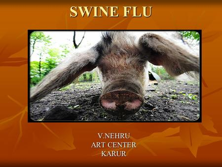 SWINE FLU V.NEHRU ART CENTER KARUR. INTRODUCTION Swine flu is a respiratory disease of pigs caused by type A Influenza virus Swine flu is a respiratory.