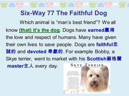 "Six-Way 77 The Faithful Dog Which animal is ""man's best friend""? We all know (that) it's the dog. Dogs have earned 贏得 the love and respect of humans. Many."