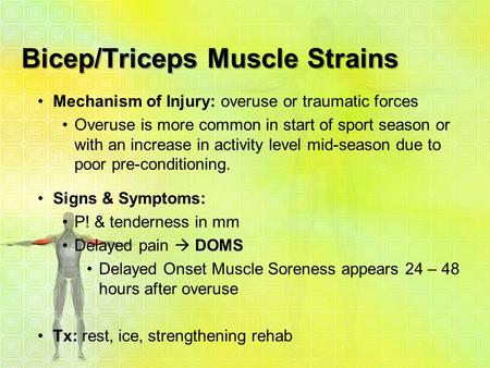 Bicep/Triceps Muscle Strains Mechanism of Injury: overuse or traumatic forces Overuse is more common in start of sport season or with an increase in activity.