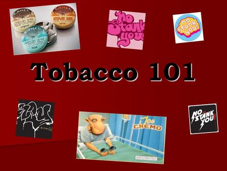 Tobacco 101. Tobacco Trivia Nicotine from an intravenous injection will cause the average sized man or woman to become sick within a few minutes? Nicotine.