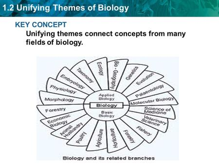 1.2 Unifying Themes of Biology KEY CONCEPT Unifying themes connect concepts from many fields of biology.